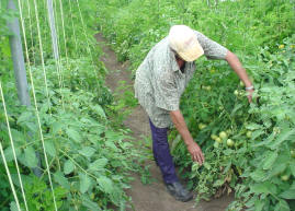 Las Tunas Cuba in Search of an Ecologically Sustainable Agrarian Development