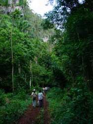 bosque camaguey