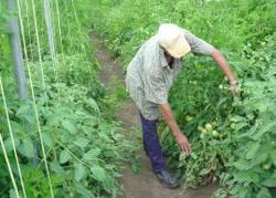 Las Tunas Cuba Propitiates More Consumption of Vegetables and Condiments