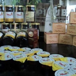Honey production in Cuban province grows 25 percent