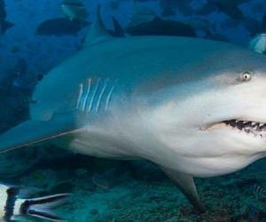 Cuban Fishermen Miraculously Survived Seven Hours At Sea After Shark